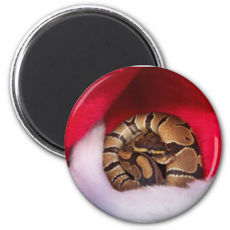 Snake curled up in Santa hat, ball python 2 Inch Round Magnet