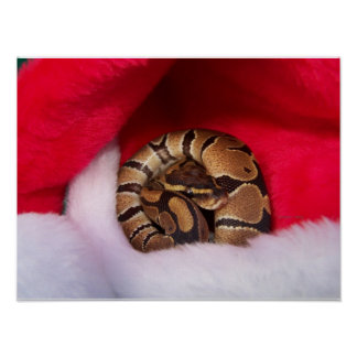Snake curled up in Santa hat, ball python Print