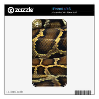 snake decal for iPhone 4