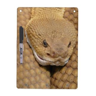 Snake Dry Erase Board