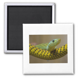 Snake Enthusiasts 2 Inch Square Magnet