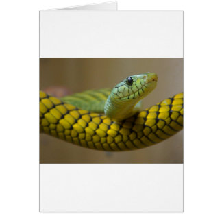 Snake Enthusiasts Card