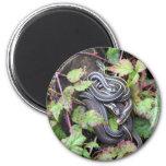 Snake Family Magnet