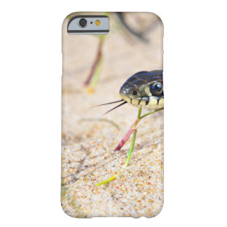 Snake Flicking Its Tongue Barely There iPhone 6 Case