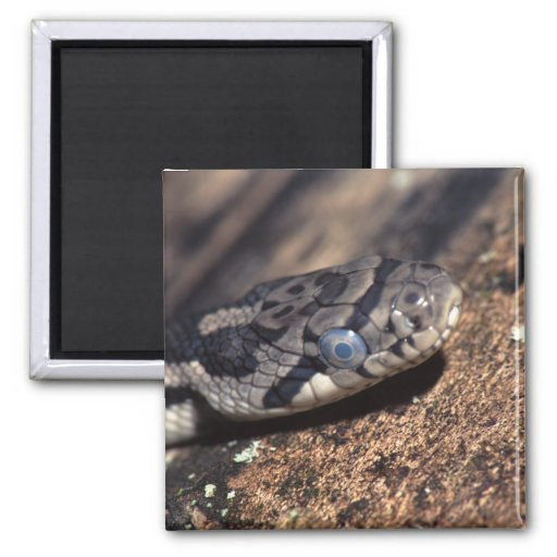 snake fridge magnet