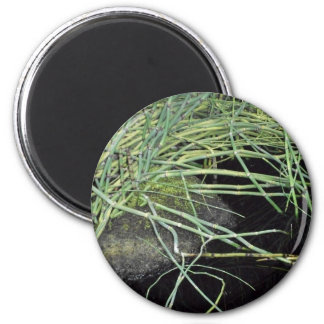 Snake Grass Print - Nature Series 2 Inch Round Magnet
