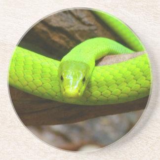 Snake Green Mamba Animal Scary Party Destiny Beverage Coaster