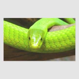 Snake Green Mamba Animal Scary Party Destiny Rectangle Stickers