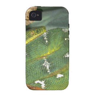 Snake in a box vibe iPhone 4 case