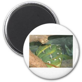 Snake in a box fridge magnets