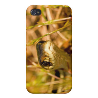 Snake in the Grass iPhone 4 Cases