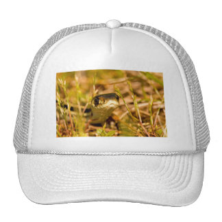 Snake in the Grass Mesh Hats
