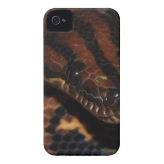 Snake iPhone 4 Case
