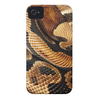 snake lovers Ball Python iPhone 4 Case-Mate Case