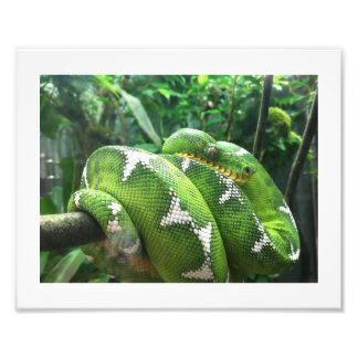 Snake Picture Photo Print