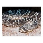 Snake Postcard