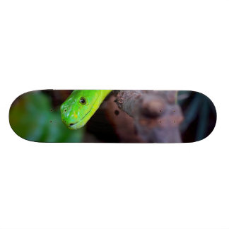 Snake Reptile Skateboard