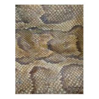 Snake skin design postcard