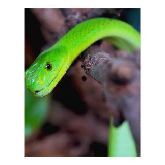 Snake Style Letterhead