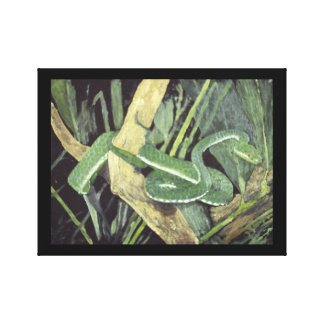 Snake (with border) canvas print
