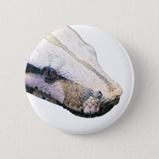 snakes- amazonian constrictor boa pinback button