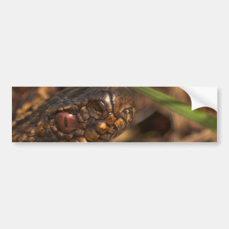 Snakes Head Bumper Stickers