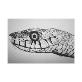 Snakes Head Stretched Canvas Prints