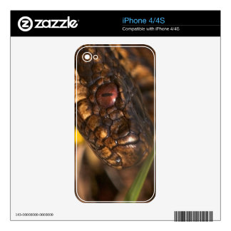 Snakes Head iPhone 4/4S Skin Skin For The iPhone 4