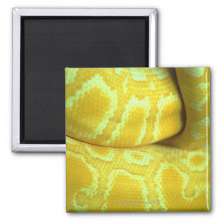 Snakeskin amarillo imán cuadrado
