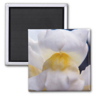snap Dragon 2 Inch Square Magnet