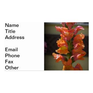 Snap Dragon Business Card
