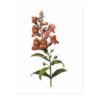 snapdragon(Antirrhinum sp.) by Redouté Postcard