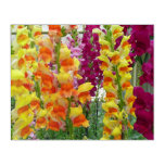 Snapdragons Colorful Floral Acrylic Wall Art