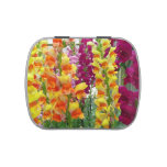 Snapdragons Colorful Floral Jelly Belly Candy Tin