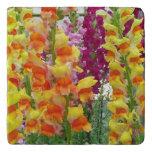 Snapdragons Colorful Floral Trivet