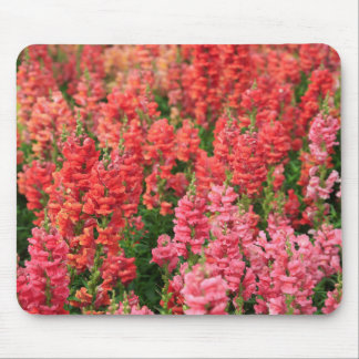 SnapDragons Mouse Pad