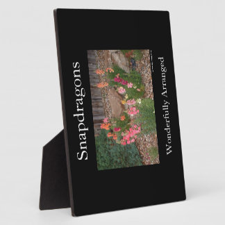 Snapdragons Photo Plaques