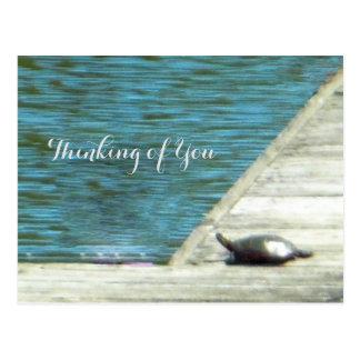 Snapper Turtle Dock Postcard