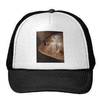 Snapperhead Mesh Hat