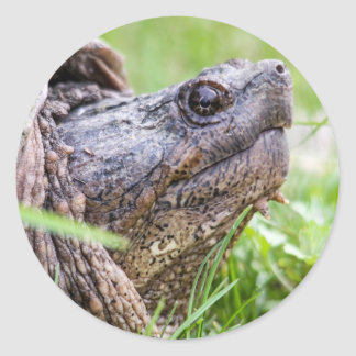 Snapping Turtle Round Sticker