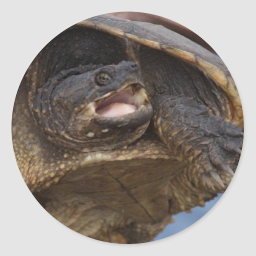Snapping Turtle Stickers