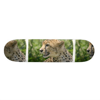 Snarling Cheetah  Skateboard
