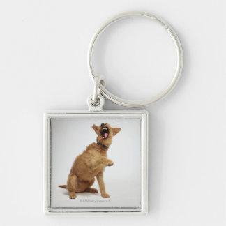 Snarling Dog Keychain