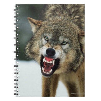 Snarling gray wolf spiral notebooks