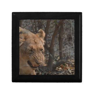 Snarling Lioness Jewelry Box