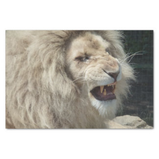 Snarling White Lion Tissue Paper