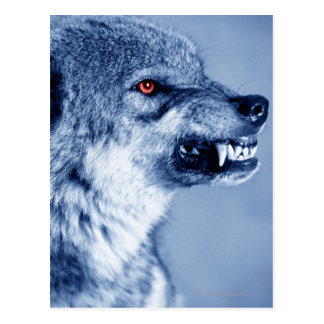 Snarling wolf (Canis Lupus), profile (Digital Postcard