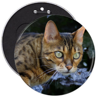 Sneaking Bengal Cat 6 Inch Round Button