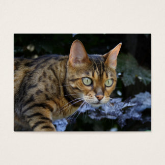 Sneaking Bengal Cat Business Card