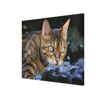 Sneaking Bengal Cat Canvas Print